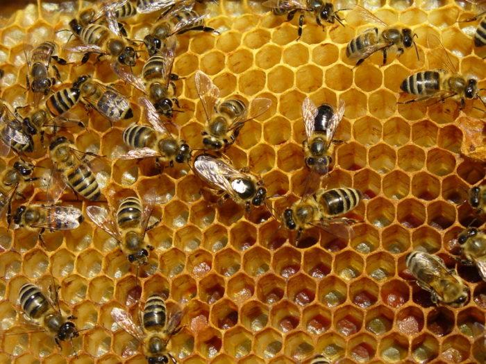 Colmenar de abejas